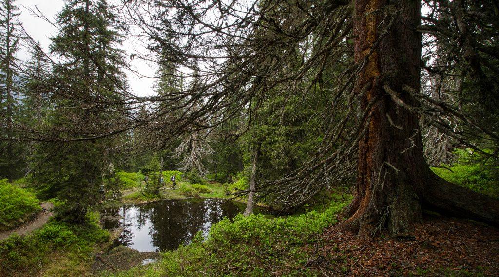 Rauriser Primeval Forest
