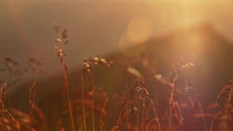 Tauern rye in the sunlight