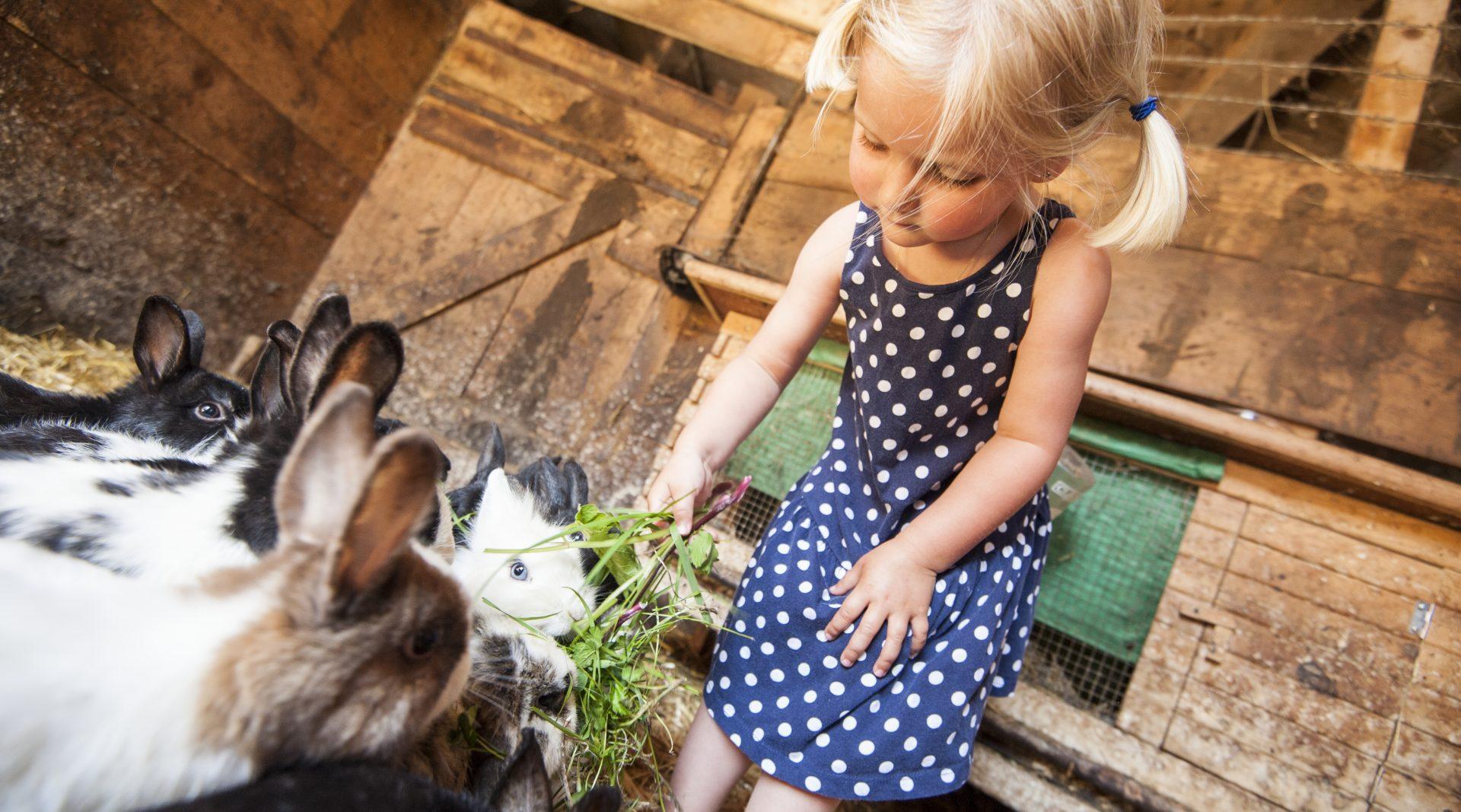 Bambina bionda che foraggia i conigli in fattoria