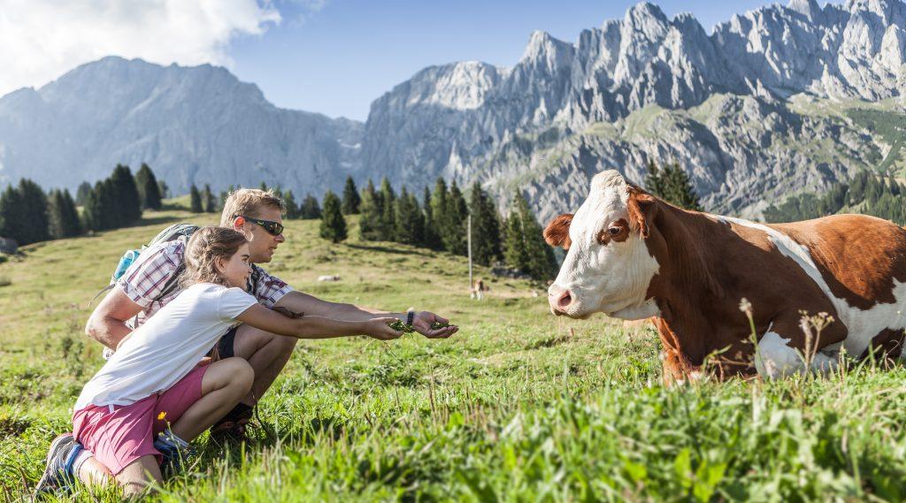Wandelaars en een koe op de alm.
